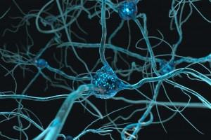 Cos'è e come funziona il sistema nervoso?
