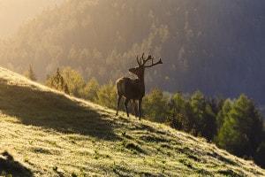 Fauna del Trentino