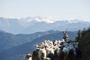 I pastori è una notissima poesia di Gabriele d'Annunzio