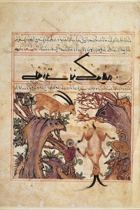 """Antilopi e altri animali, miniatura dal bestiario """"Utilità degli animali"""" di Ibn Bukhtishu, 1298, Arte Islamica, XIII secolo"""