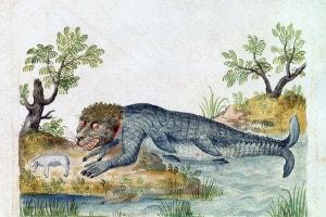Tritone, XVI secolo. Illustrazione da un bestiario francese di una mitica creatura anfibia che sta per divorare una pecora. Collezione della Bibliotheque Nationale, Parigi