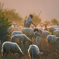 Canto notturno di un pastore errante dell'Asia